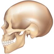 Androidアプリ「e画像解剖」のアイコン