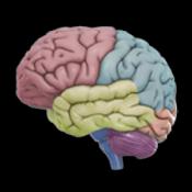 Androidアプリ「3D Brain」のアイコン
