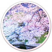 Androidアプリ「Spring Trees Live Wallpaper」のアイコン