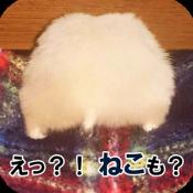 Androidアプリ「ハムねこまとめんじゃー」のアイコン