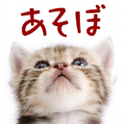 Androidアプリ「猫トランプ 可愛い無料ゲーム」のアイコン