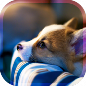 Androidアプリ「犬の癒し育成ゲーム3D 無料でペット育成」のアイコン