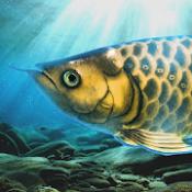 Androidアプリ「稚魚から育てるアロワナ」のアイコン