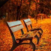 Androidアプリ「秋の自然音 ~快適な睡眠のために~ リラックス睡眠アプリ」のアイコン