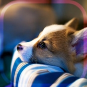 iPhone、iPadアプリ「幸せの犬育成ゲーム3D*無料*」のアイコン