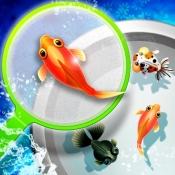 iPhone、iPadアプリ「シン・金魚すくい屋」のアイコン
