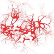 iPhone、iPadアプリ「血管年齢測定」のアイコン