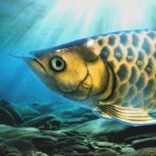 iPhone、iPadアプリ「稚魚から育てるアロワナ」のアイコン