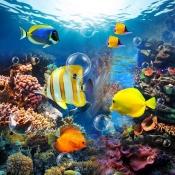 iPhone、iPadアプリ「Amazing Aquarium Clock LITE」のアイコン