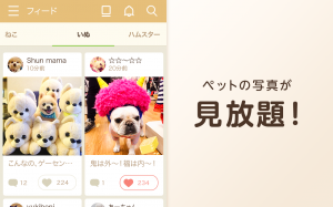 Androidアプリ「かわいい動物写真がたくさん~パシャっとmyペット~」のスクリーンショット 2枚目