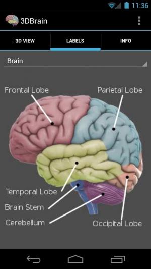Androidアプリ「3D Brain」のスクリーンショット 3枚目