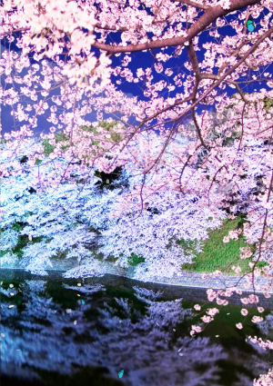 Androidアプリ「Spring Trees Live Wallpaper」のスクリーンショット 3枚目