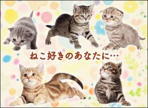 Androidアプリ「猫トランプ 可愛い無料ゲーム」のスクリーンショット 4枚目