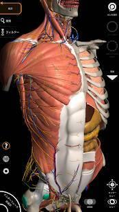 Androidアプリ「解剖学 - 3Dアトラス」のスクリーンショット 1枚目
