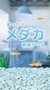 Androidアプリ「まったりメダカ育成ゲーム」のスクリーンショット 1枚目