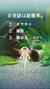 Androidアプリ「癒しのウーパールーパー育成ゲーム」のスクリーンショット 2枚目