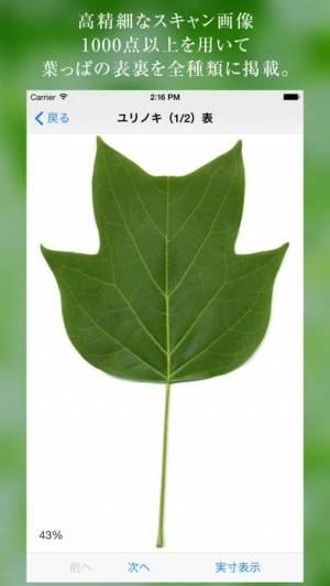 iPhone、iPadアプリ「葉っぱ図鑑 - Leaf Dictionary -」のスクリーンショット 2枚目