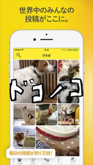 iPhone、iPadアプリ「ドコノコ - いぬねこ写真アプリ」のスクリーンショット 1枚目