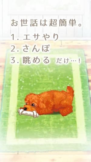 iPhone、iPadアプリ「癒しの子犬育成ゲーム〜トイプードル編〜(無料)」のスクリーンショット 2枚目