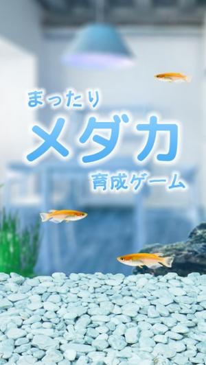 iPhone、iPadアプリ「まったりメダカ育成ゲーム」のスクリーンショット 1枚目