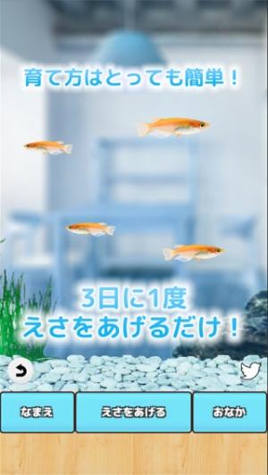 iPhone、iPadアプリ「まったりメダカ育成ゲーム」のスクリーンショット 2枚目