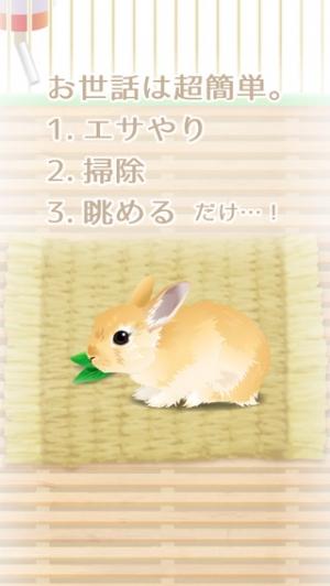 iPhone、iPadアプリ「癒しのウサギ育成ゲーム(無料)」のスクリーンショット 2枚目