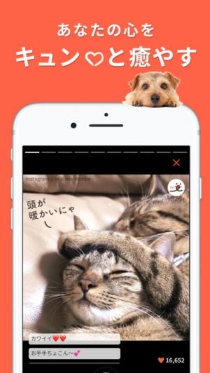 iPhone、iPadアプリ「PECO(ペコ):いぬねこペット動画」のスクリーンショット 2枚目