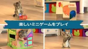 iPhone、iPadアプリ「Little Kitten 小さな子猫 - お気に入りの猫」のスクリーンショット 2枚目