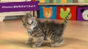 iPhone、iPadアプリ「Little Kitten 小さな子猫 - お気に入りの猫」のスクリーンショット 4枚目