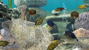iPhone、iPadアプリ「Fish Farm 3 - Aquarium」のスクリーンショット 4枚目