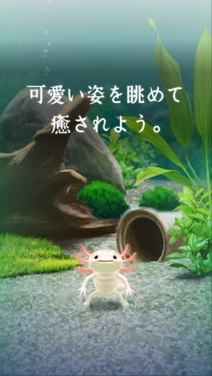 iPhone、iPadアプリ「癒しのウーパールーパー育成ゲーム」のスクリーンショット 3枚目