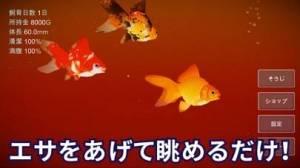 iPhone、iPadアプリ「金魚育成アプリ「ポケット金魚」」のスクリーンショット 4枚目