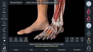 iPhone、iPadアプリ「Essential Anatomy 5」のスクリーンショット 4枚目