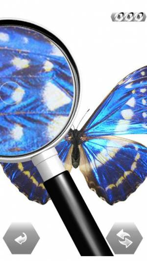 iPhone、iPadアプリ「世界の昆虫採集」のスクリーンショット 4枚目