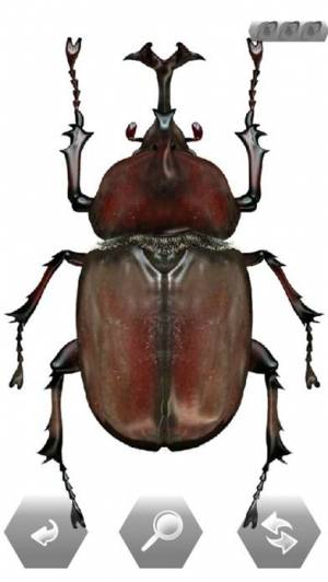 iPhone、iPadアプリ「世界の昆虫採集」のスクリーンショット 3枚目