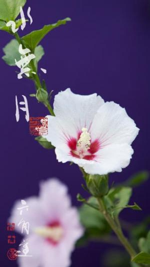 iPhone、iPadアプリ「動く・はなといろカレンダー - そよ風に揺れる美しい花たち」のスクリーンショット 1枚目