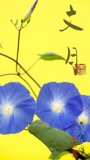 iPhone、iPadアプリ「動く・はなといろカレンダー - そよ風に揺れる美しい花たち」のスクリーンショット 2枚目