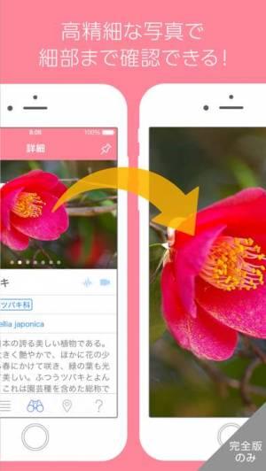 iPhone、iPadアプリ「美しい写真図鑑 - にほんの植物 - プチペディア」のスクリーンショット 4枚目