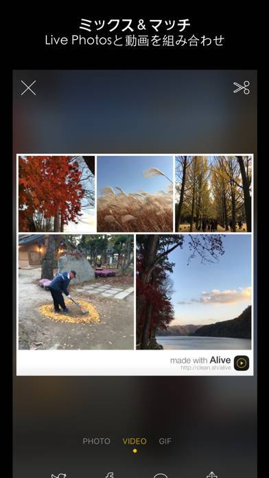 「Alive - Create & Share Animated Collages for Live Photos and Videos」のスクリーンショット 3枚目
