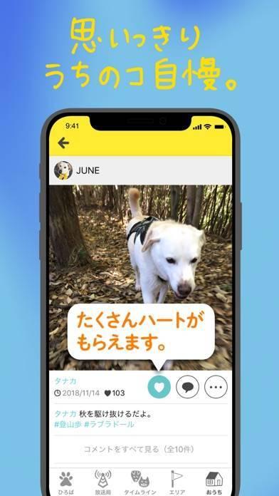「ドコノコ - いぬねこ写真アプリ」のスクリーンショット 2枚目