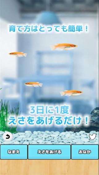 「まったりメダカ育成ゲーム」のスクリーンショット 2枚目