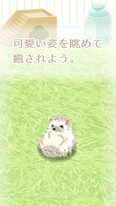 「癒しのハリネズミ育成ゲーム」のスクリーンショット 3枚目