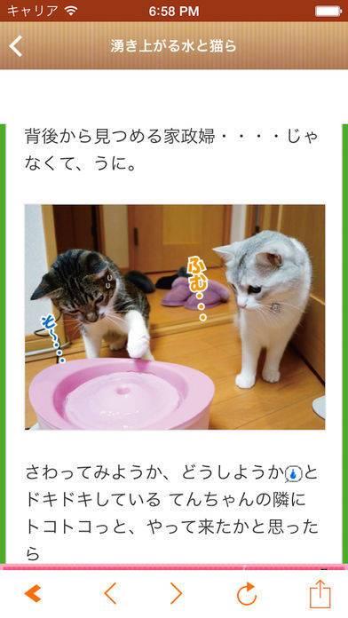 「日刊ねこ新聞 - 猫ブログ&ネコ動画アプリ」のスクリーンショット 2枚目