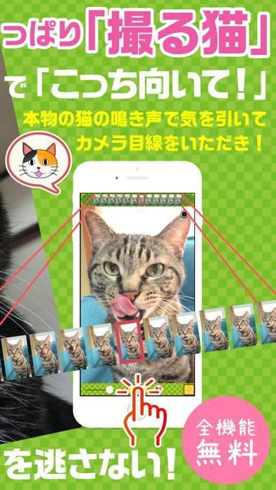 「撮る猫」のスクリーンショット 2枚目