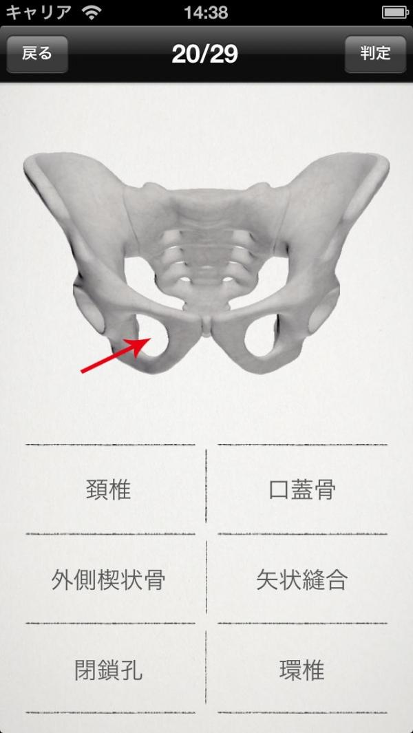 「らくらく解剖学[骨] 無料版」のスクリーンショット 3枚目
