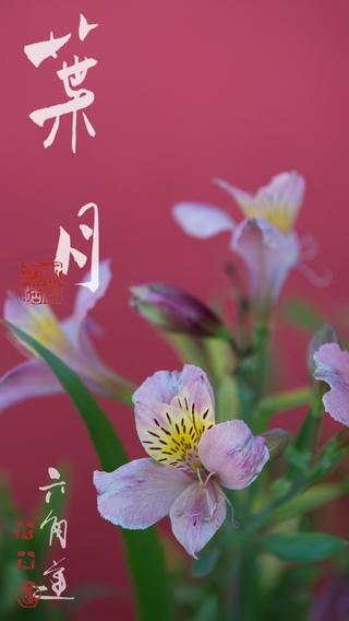 「動く・はなといろカレンダー - そよ風に揺れる美しい花たち」のスクリーンショット 3枚目
