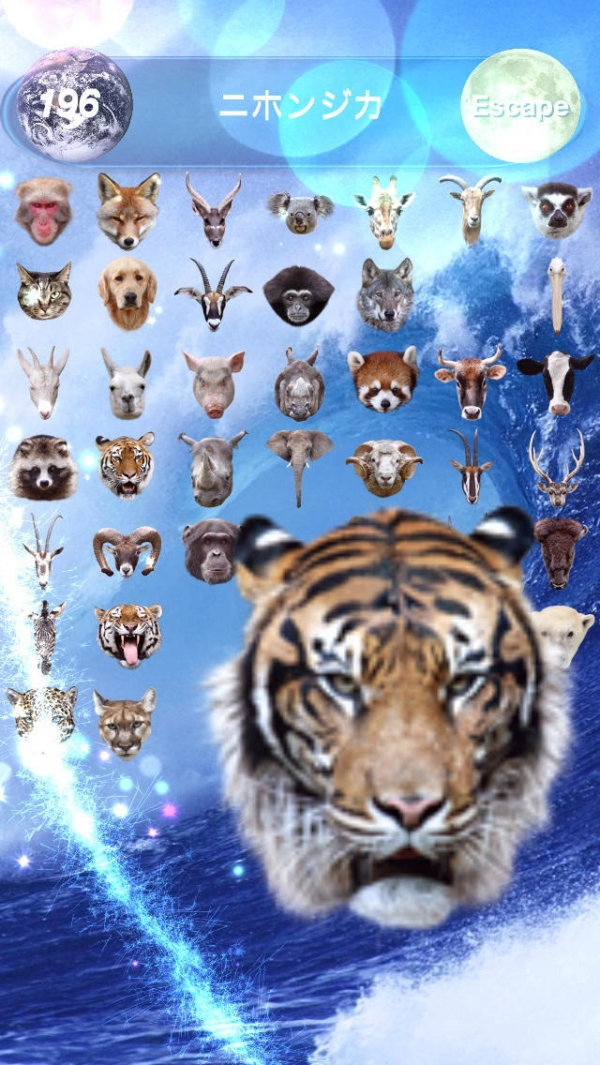 「Animal Faces Touch :: Face to Face Animal Touch Game  〜動物の顔を記憶して早くタッチすることを競うクイズ。Wikiへのリファレンスで動物王国の世界へ。生活の中で動物たちと触れ合おう!〜」のスクリーンショット 3枚目
